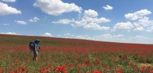 theresa-fersch_poppies